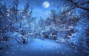 Заснеженный лес ночью