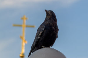 Ворон на церкви