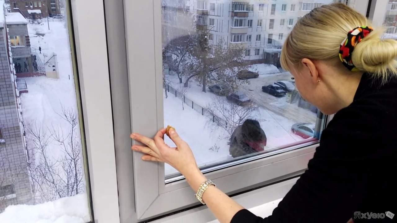 Ворона заглядывает в окно
